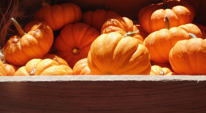 Pumpkins Mini 2